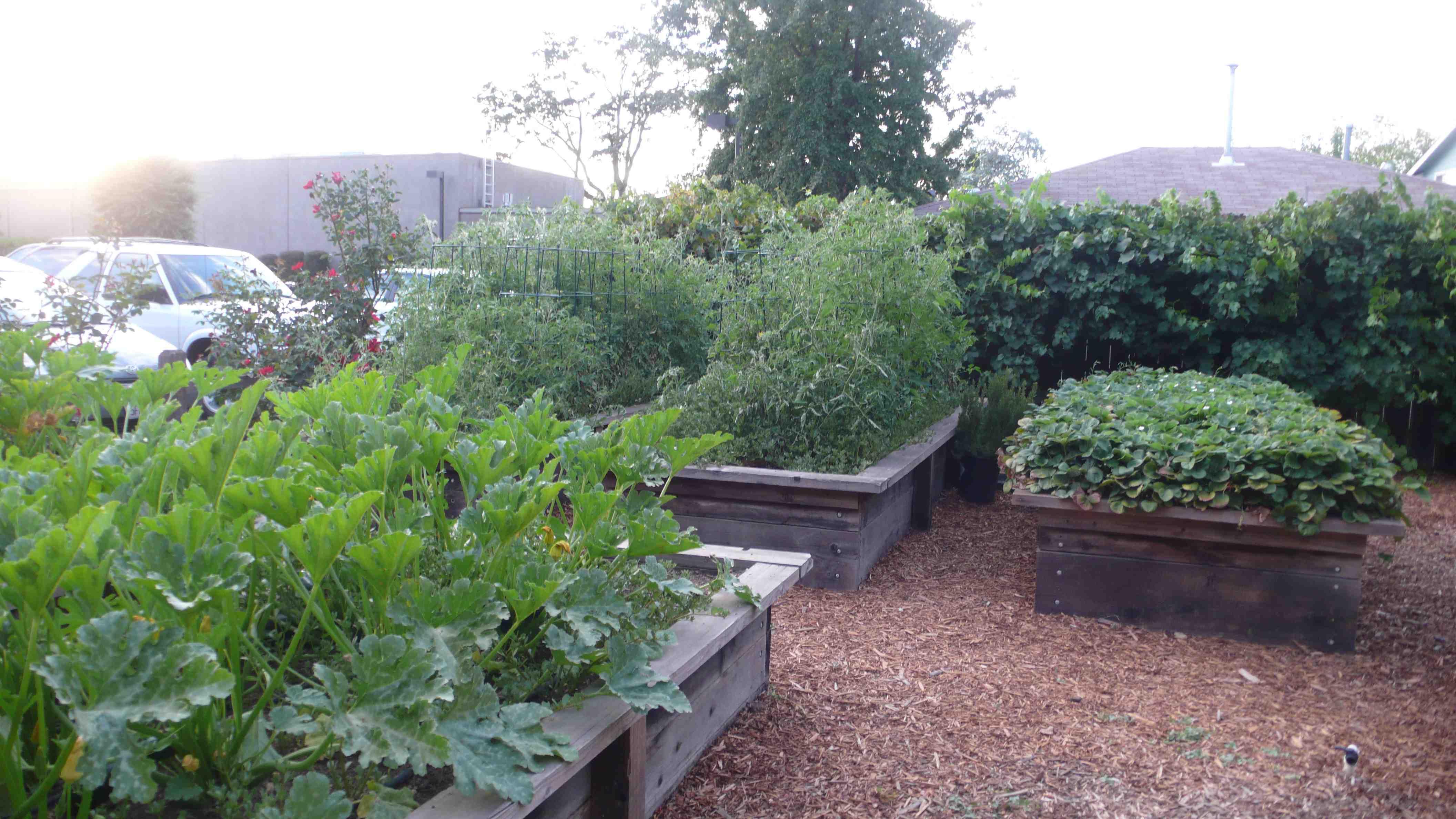 ad hoc garden