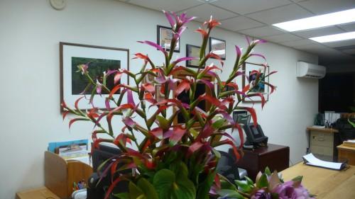 flowers in office